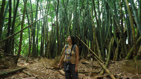 Tourist Stands in Awe of Giant Bamboo in Sri Lanka Live Action