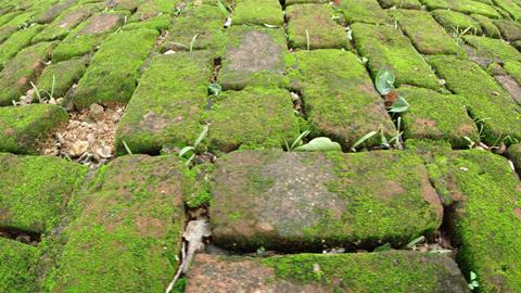 Mossy Brick Pavers in Polonnaruwa. Sri Lanka. FullHD video Footage