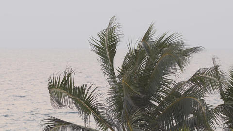 Tropical Palm Tree over a Gray Sea. with Sound Footage