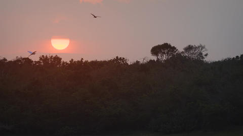 Sun Setting over the Wilderness at Yala National Park. 4k footage 2160p Live Action