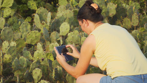 Tourist taking snapshots of prickly pear cacti in Sri Lanka Footage