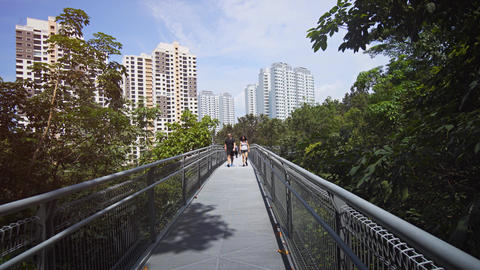 Walk along broad. elevated walkway at Telok Blangah Hill Park Footage