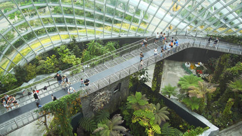 Tourists on elevated walkway in the Cloud Forest at Gardens by the Bay Footage