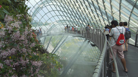 Tourists viewing vertical gardens inside Cloud Forest at Gardens by the Bay Live Action