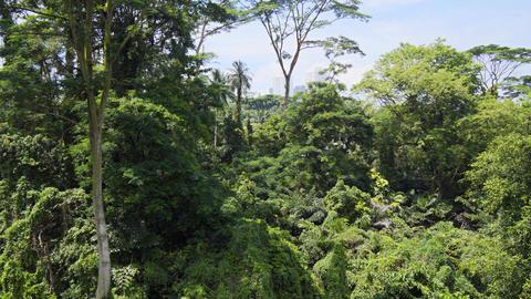 Dense Forest Canopy from Telok Blangah Hill Park's Catwalk Live Action