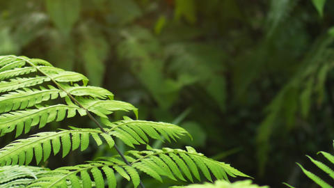 Gentle Breeze Stirring Tropcal Ferns in the Jungle Live Action