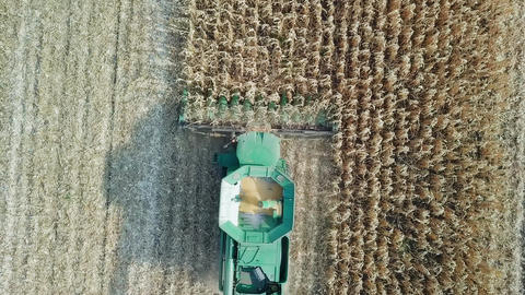 Harvesting of corn. Harvester gather corn from the field. Russia, From Dron, Footage