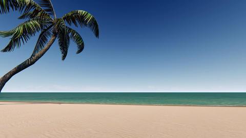 Sandy beach with palm tree and blue sky Footage