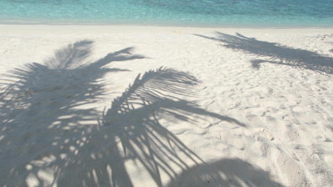 Shadows of coconut palms on white sand beach. Maldives Footage