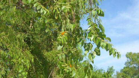 Orange Butterflies Stock Video Footage