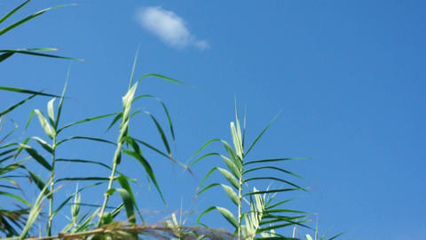 Grass blowing in the wind Stock Video Footage