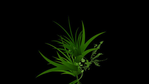 flower & plant growing background, Stock Animation