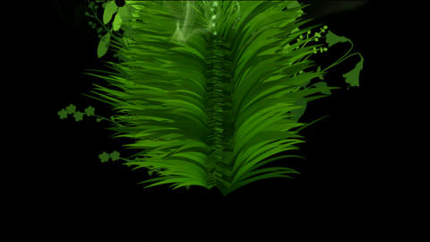 flower & plant growing background Animation