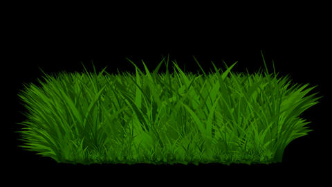 The growth of grass Stock Video Footage
