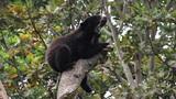 Bear 04 Footage