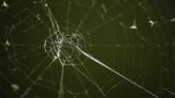 Cobweb against dark green background Footage