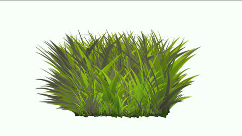 grass Stock Video Footage