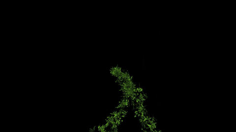 flying group of vine & plant,decoration flower wreath Stock Video Footage