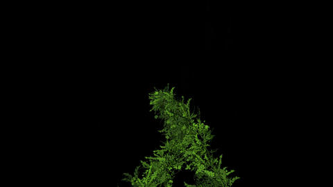 flying group of vine & plant,decoration flower wreath Animation