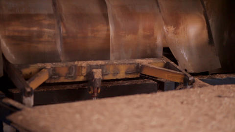 View of log moving along conveyor belt at the furniture factory Footage