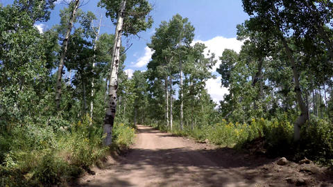 Driving along a dirt road with Aspen trees B Live Action