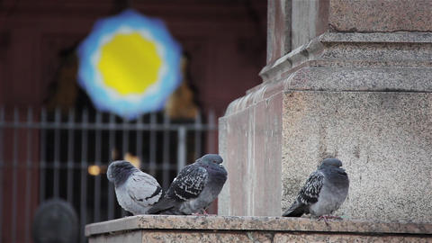 Pigeons in the Plaza de Mayo, Buenos Aires, Argentina Live Action