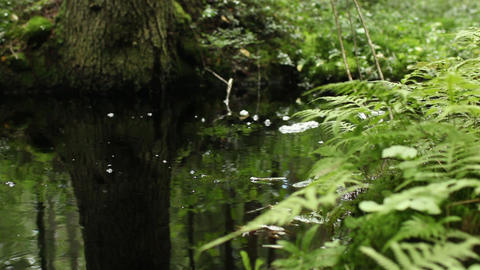 Green water Footage
