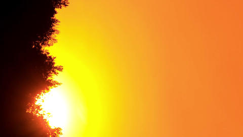 Vertical video. Sunset through the trees. Close-up. Free of glare insects. Time Footage
