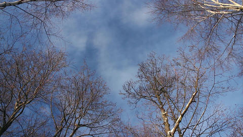 clouds float high in the sky above the trees Footage
