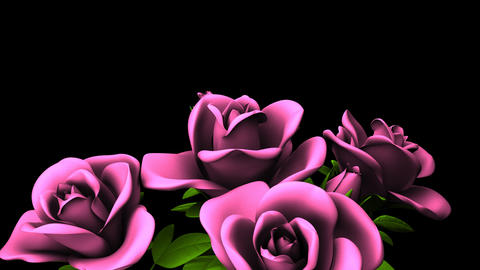 Pink Roses Bouquet On Black Text Space CG動画