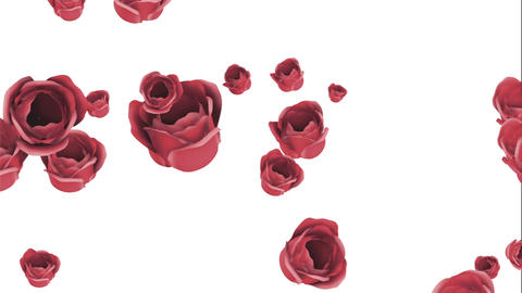 Falling red roses on a white background Animación