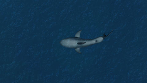 4K Great White Shark in the Ocean High Angle Animation