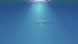 4K Great White Shark in the Ocean Side View 1 Animación