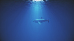 4K Great White Shark in the Ocean Side View 2 Animation