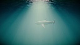 4K Great White Shark in the Ocean Side View 3 Animation