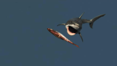 The Great White Shark Attack 2 Animation