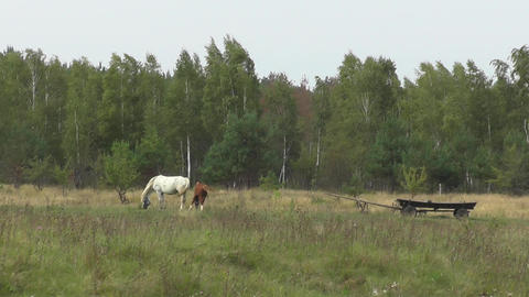 Horses and cart in meadow. Rural landscape. Green summer grassland with forest Footage