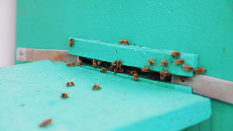 Closeup of bees flying into beehive entrance on summer day Footage