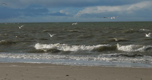 Birds on North Frisian Island Beach of Amrum in Germany Footage