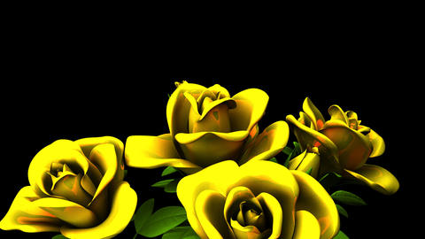 Yellow Roses Bouquet On Black Text Space Animation