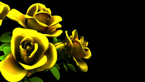 Yellow Roses Bouquet On Black Text Space CG動画
