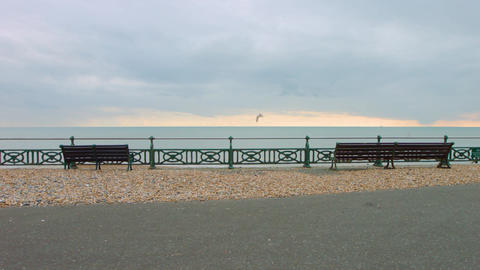 Seagull flying over benches looking out at brighton beach Live Action