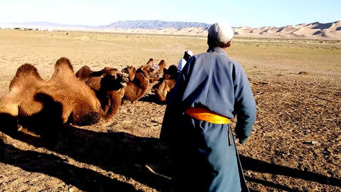Mongolian Camel Nomad Family stock footage