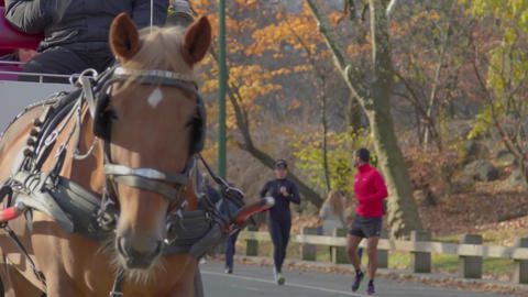 Central Park Horse Carriage, Slow Motion Footage