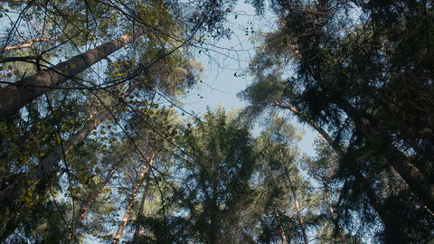 Deep Green Forest, Green Woods Footage