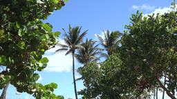USA Florida Miami South Beach Ocean Drive palm trees and plants against blue sky Archivo