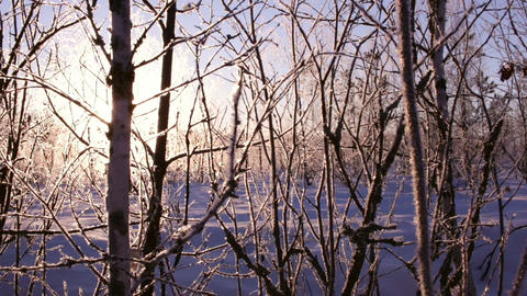 Rising sun blinking behind frosty trees Footage