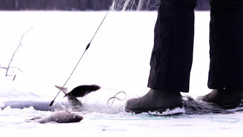 Lifting winter gillnets with perch and bream Live Action
