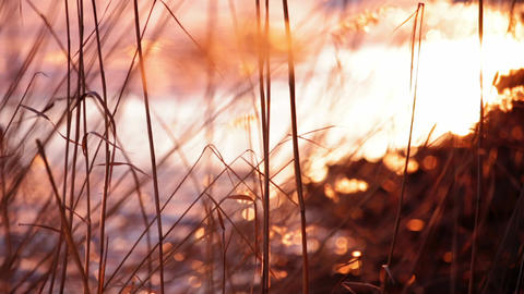 Reeds in sunset by a frozen lake in springtime Footage