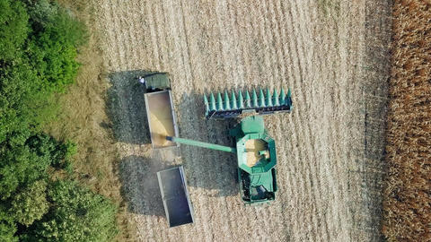 Harvesting of corn. Harvester gather corn from the field. Russia, From Dron, ビデオ